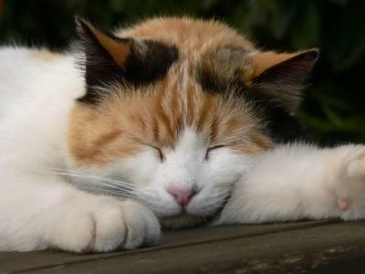 Кошка не спит по ночам - причины, методы борьбы