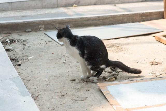Белые червячки в кале у кошки - виды, симптомы, лечение