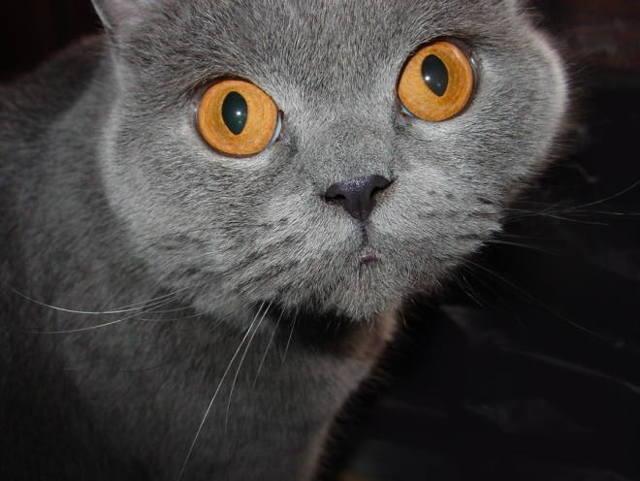 Сколько почек у кошки и где они находятся
