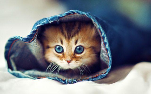 Когда у котят меняется цвет глаз