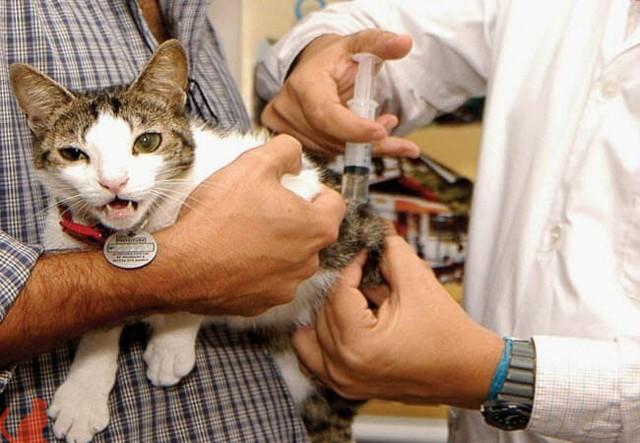 Симптомы бешенства у человека после укуса кота
