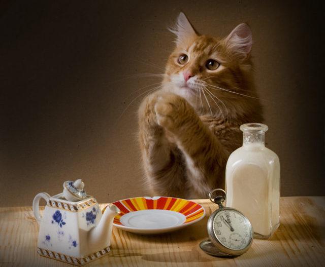 6 причин, почему кошка постоянно просит есть