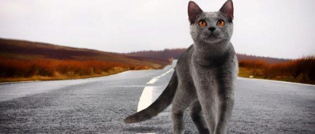 Память у кошек - есть ли и какая