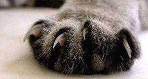 Последствия удаления когтей у кошек - особенности операции