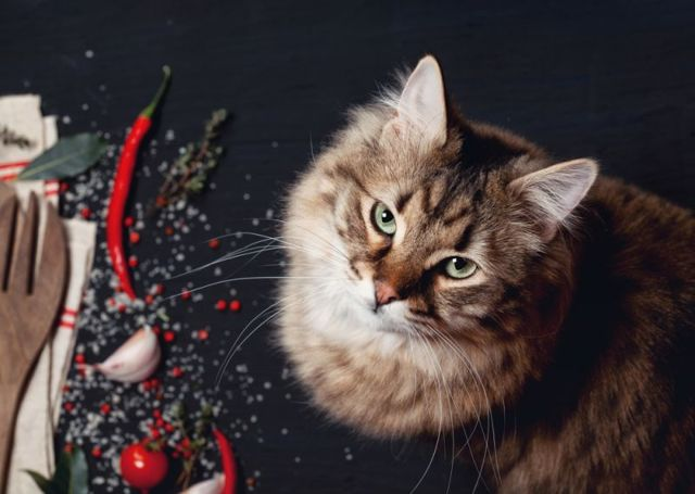 5 причин почему кот перестал есть сухой корм - что делать