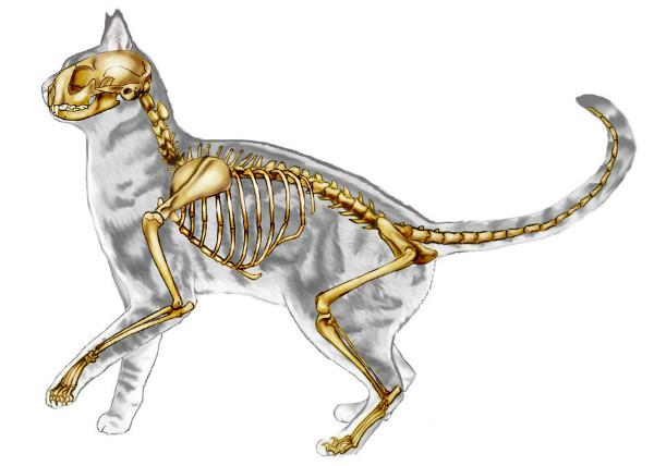 Хондроитин для кошек: инструкция по применению
