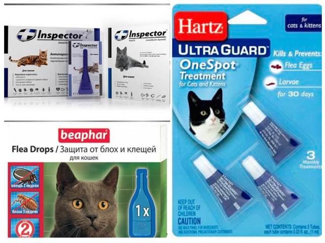 Блохи у кошки опасны для человека - передаются ли человеку