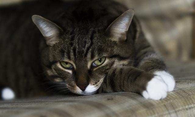 Как промыть нос коту - препараты для промывания