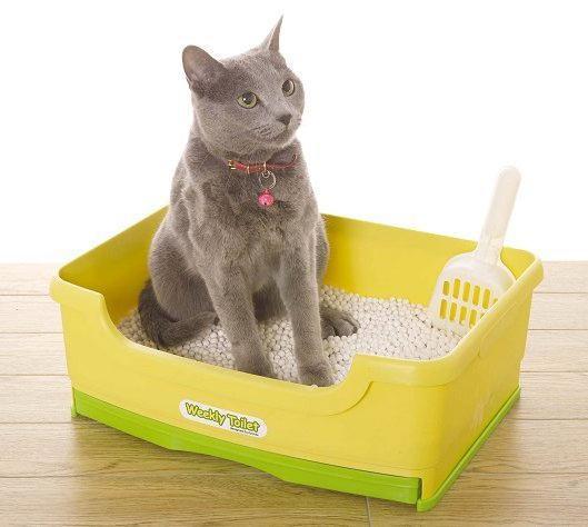 Как воспитать ласкового  и послушного котенка