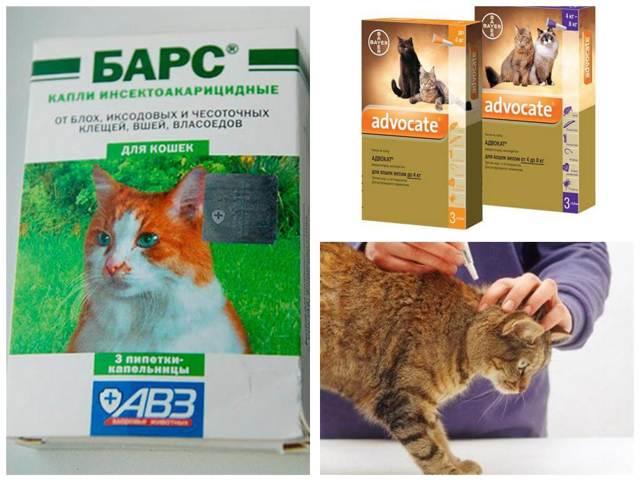 Как избавиться от блох у кошки в домашних условиях