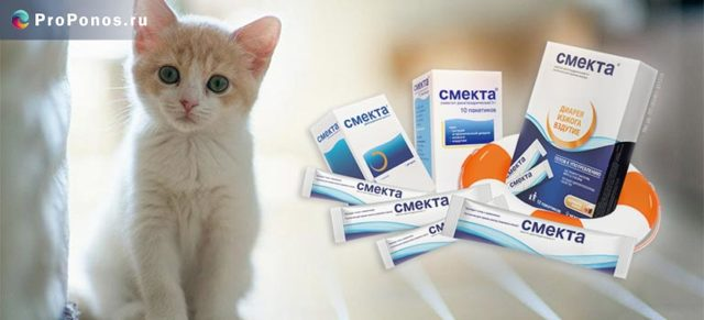 Смекта коту - как давать и розводить, дозировка