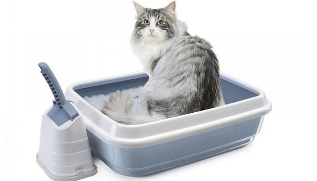 Запор у кошки - лечение в домашних условиях