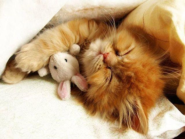 Почему кошки все время спят - причины и признаки заболевания