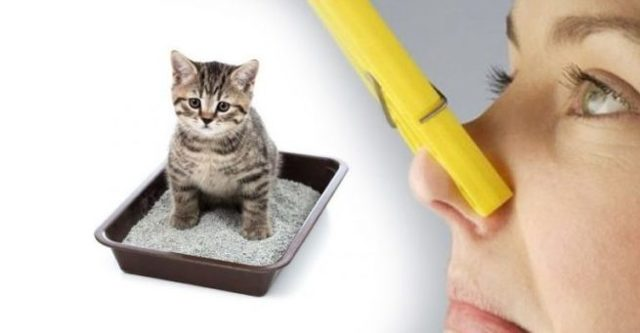 4 причины почему от кота пахнет мочой - что делать