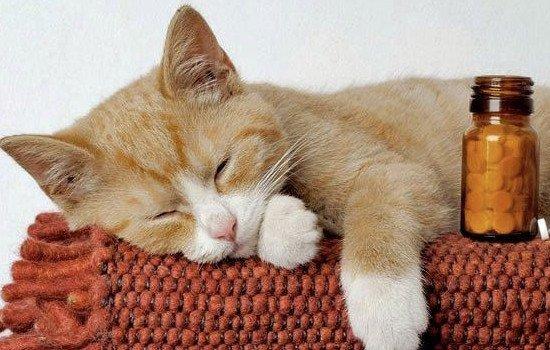 Почему у кошек мокрый нос - что ето значит