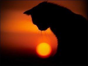 Как пережить смерть кошки - 5 советов психолога