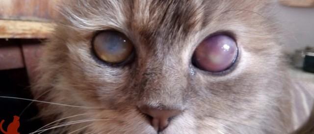 7 причин почему у кота заплыл глаз - что делать