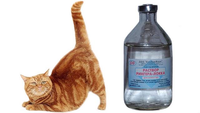 Раствор Рингера для кошек - инструкция по применению