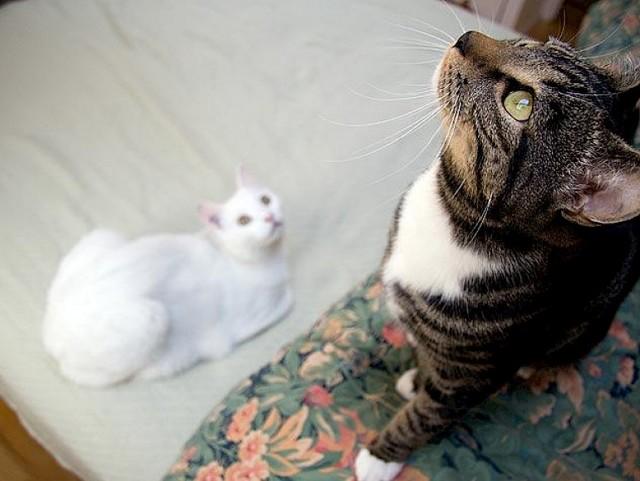Пропофол для кошек - инструкция по применению, дозировка