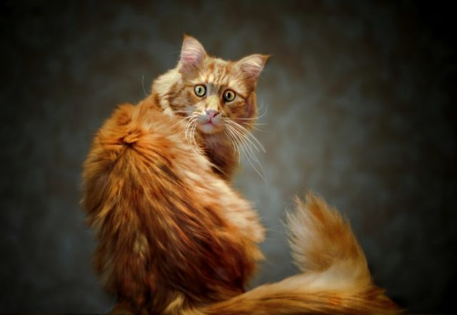 Видят ли кошки призраков - правда ли это