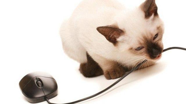 Котенок грызет провода - как отучить