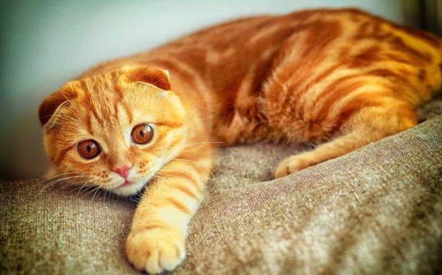 Как назвать кошку - красивые имена