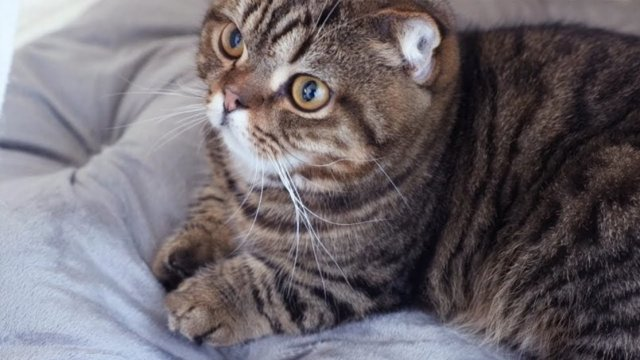 Посему кошки урчат - причины и что это значит