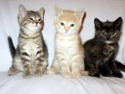 4 причины, почему у котенка сопли - чем лечить