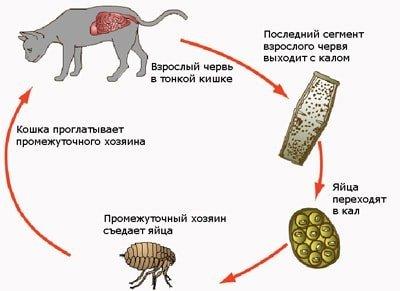 Прател для кошек - инструкция по применению препарата