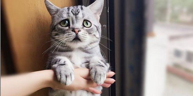 Подушечки на лапах кошки - зачем нужны, опухли и трещины на них