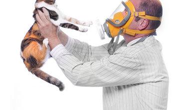Анализ на аллергию на кошек - для чего нужен, методы выявления