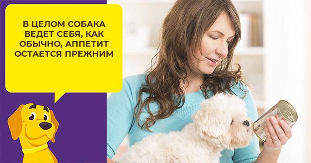 Тербинафин для кошек - инструкция по применению, дозировка