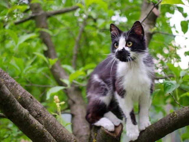 10 причин артрита у кошек - лечение и симптомы