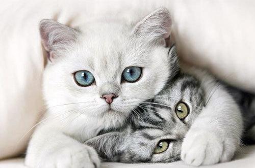 9 признаков родов у кошки - как начинаются роды