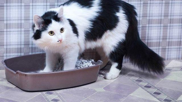 Как часто какают кошки - нормы походов в туалет
