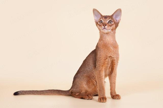 12 причин почему кот нападает на человека - что делать