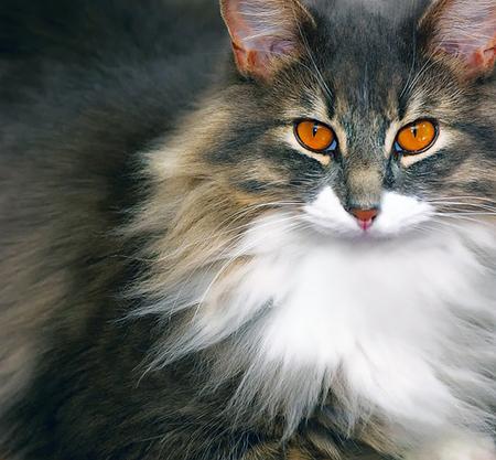Что дать котенку от запора