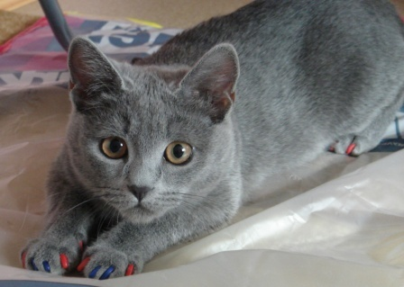 Накладки на когти для кошек - преимущества и недостатки
