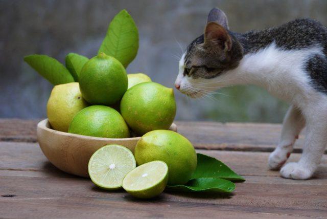 Какой запах отпугивает кошек - список и описание ароматов