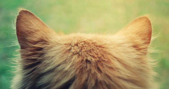 У кошки холодные уши - что делать?