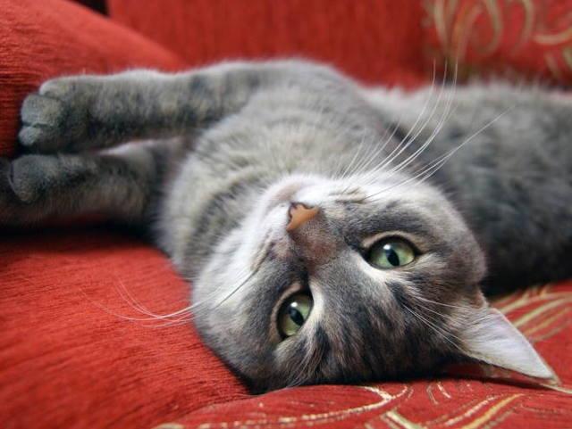 6 симптомов боли в ухе у кота - лечение и профилактика
