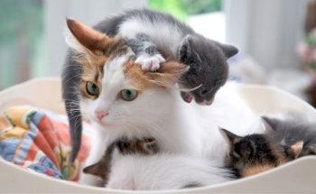 Сколько кошка вынашивает котят по времени