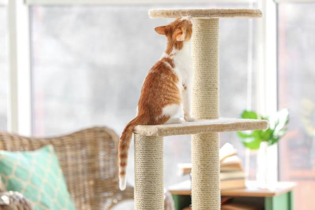 Как наказать кота: 4 основных правила