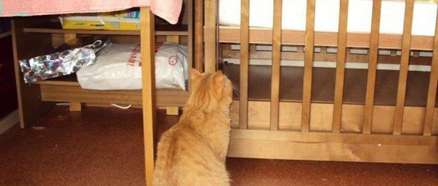 Кот и новорожденный ребенок в квартире