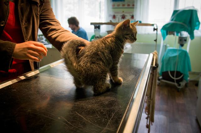 Почему котенок после прививки вялый