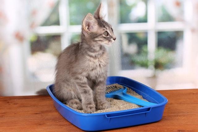 Кот ест семечки - причины и что делать
