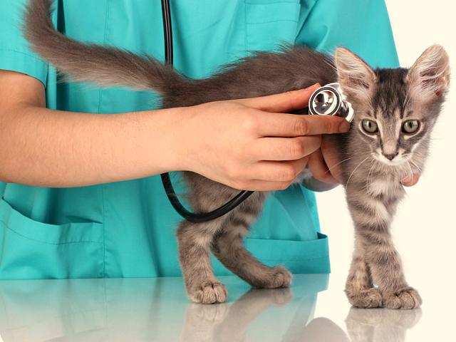 Нобивак Рабиес для кошек - инструкция по применению
