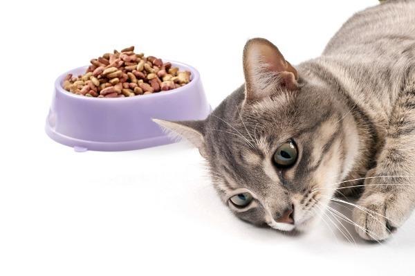 7 причин почему кот худеет, но ест хорошо - что делать