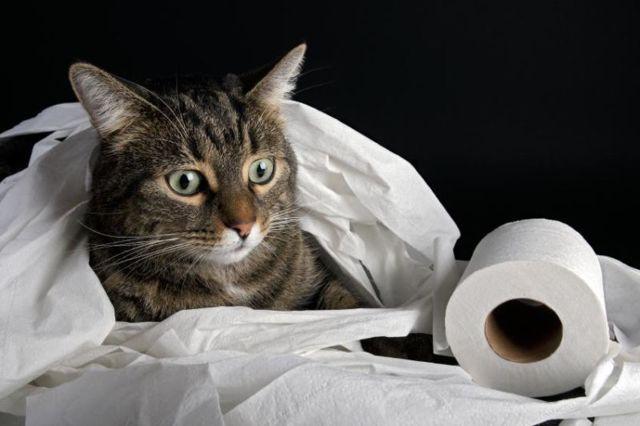 Зеленый кал у кошки - причины и лечение