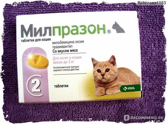 Мильбемакс для кошек - лучшие аналоги препарата